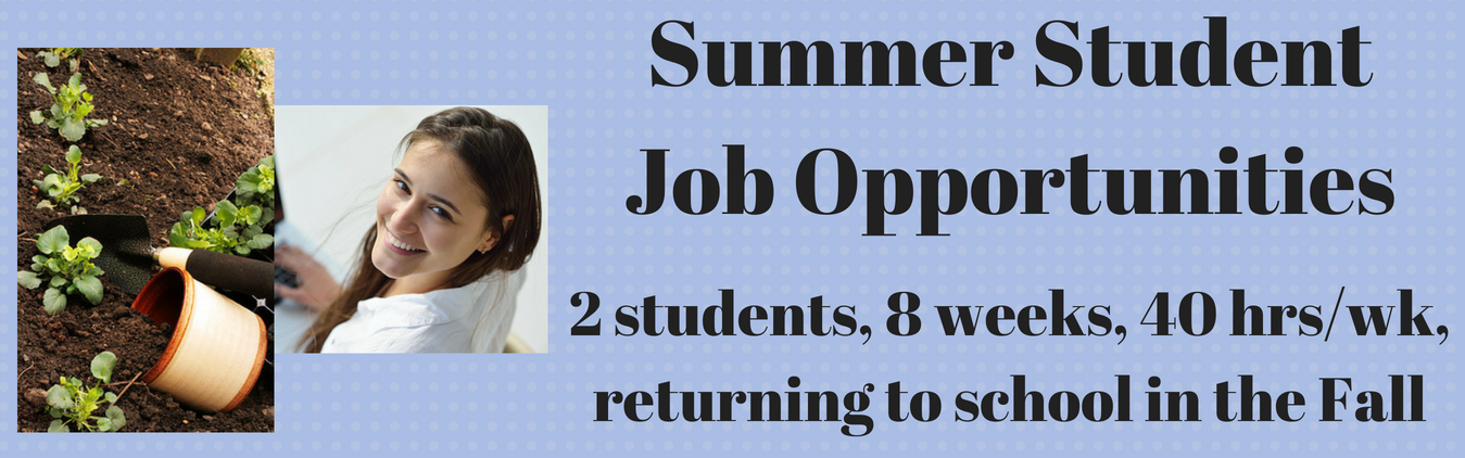 Summer Student